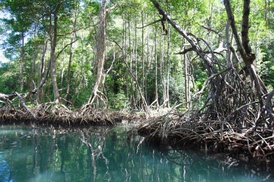 Parque Nacional Los Haitises2